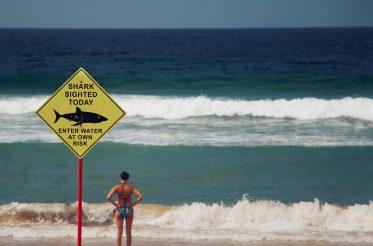 photo of a beach and a shark sign
